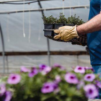 florovivaismo, carenza materie prime e manodopera